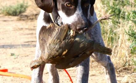 Dakota - Coopers Creek Photography