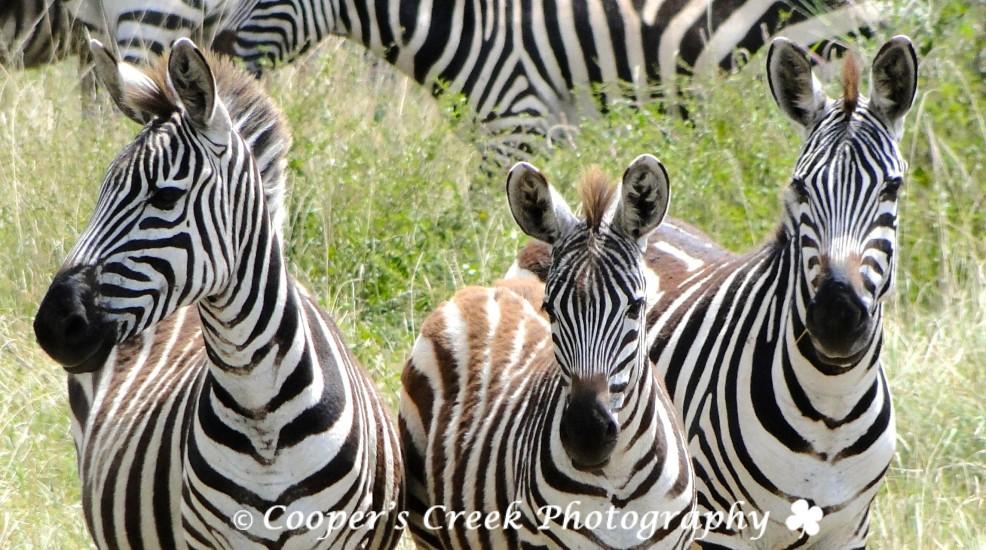 Africa 2010 main camera 2 005